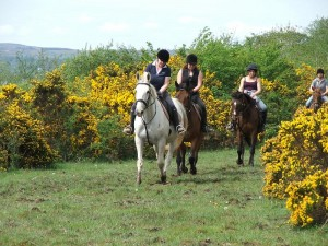 LOUGH GARA STABLES & COUNTRY PURSUITS