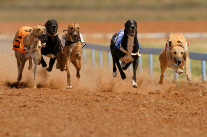 Dog Racing – Cork