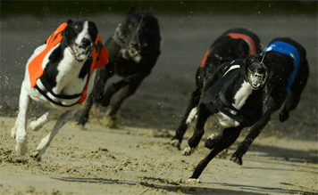 Night at the dogs – Glasgow