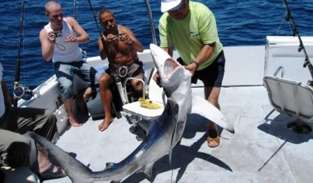 Shark Fishing – Cork